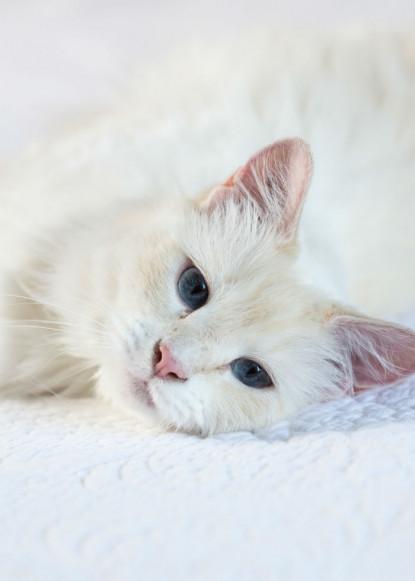 gwynne-cat-laying-down